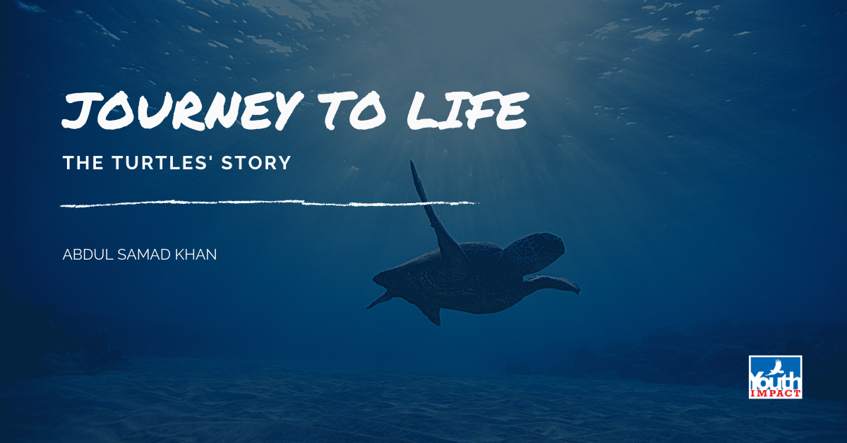 Journey to Life - The Turtles' Story